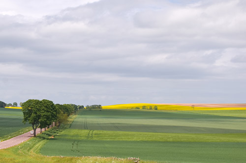 rapeseed-fields-in-france