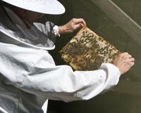 beehive-frame