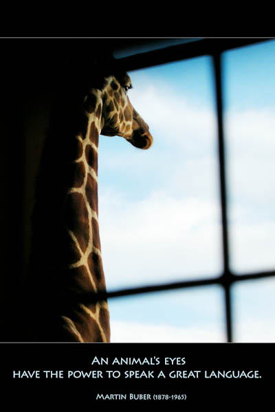 Giraffes: Encounters With Nature's Skyscrapers