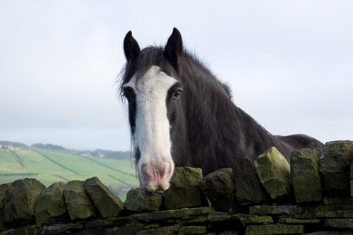horse - Quillcards ecard