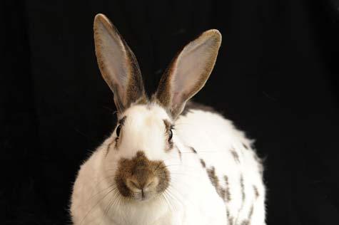 What A Cutie Rabbit! - A Quillcards™ Ecard