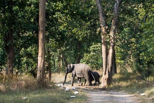 Elephants In Rajaji National Park