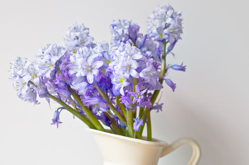 Spanish Bluebells In A Jug - A Quillcards Ecard