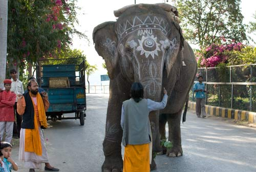 Ranu - The Indian Wedding Elephant