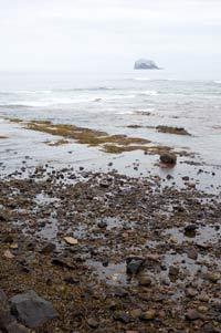 Bass Rock Viewed From North Berwick