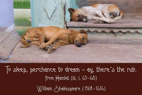A Quillcards 'Animals and Nature Quotations' Ecard
