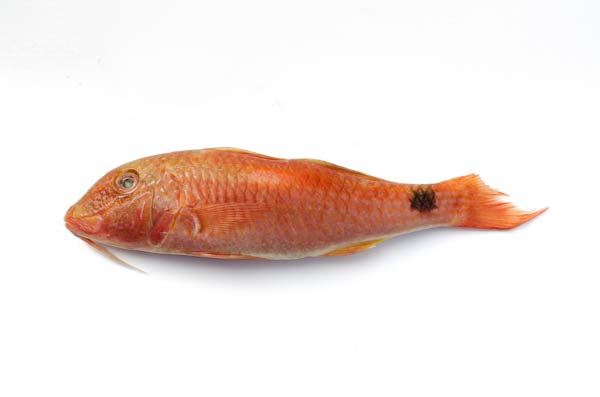 Red Mullet From The Channel Islands