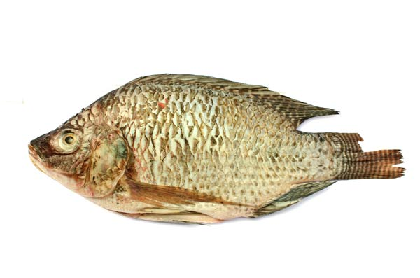 Tilapia From Mozambique