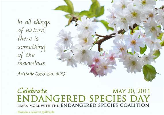 Blossoms Depend On Pollinators