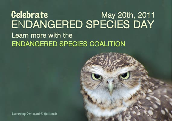 Burrowing Owl Endangered Species