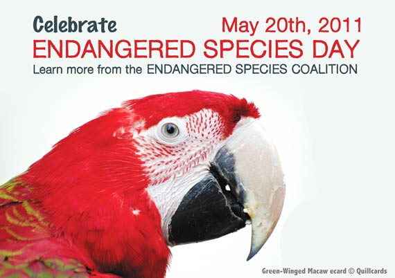 Green-Winged Macaw - A Quillcards Ecard For Endangered Species Day