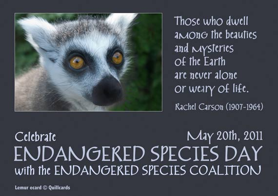 Lemur Endangered Species Day