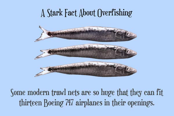 Facts About Overfishing - A Quillcards Ecard