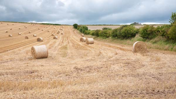 photo of bales of wheat straw