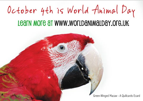 World Animal Day 2011 And The Environment
