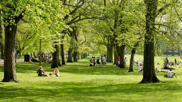 Summer Beneath The Trees In The Meadows In Edinburgh