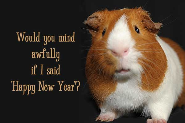 Guinea pig and text 'Would You Mind Awfully If I Said Happy New Year'