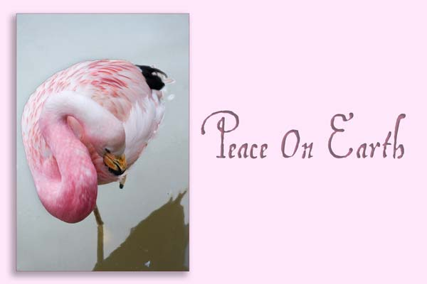 Peace On Earth - A Quillcards Ecard