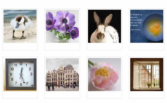 some photos from Quillcards ecards