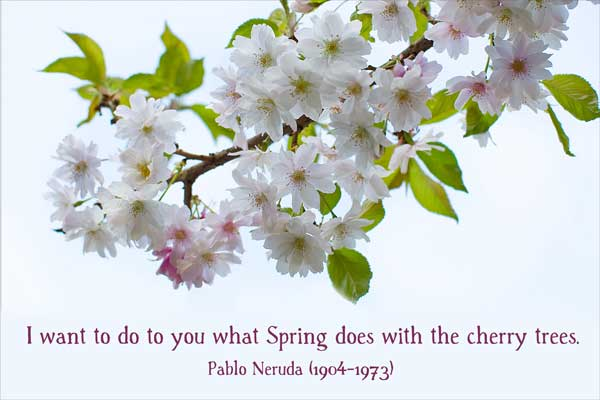 I want to do to you what Spring does with the cherry trees