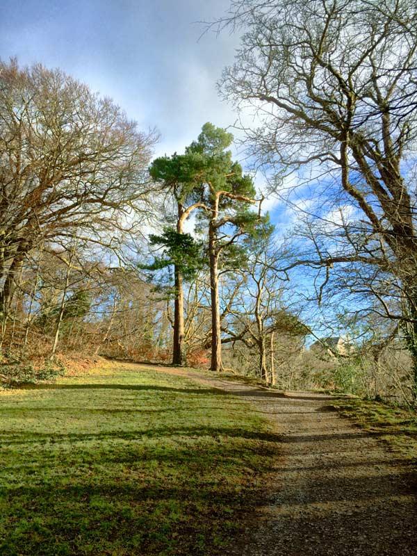 trees-colinton