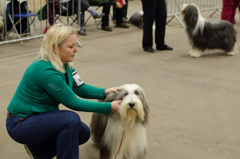 jl-waldron-with-her-bearded-collie