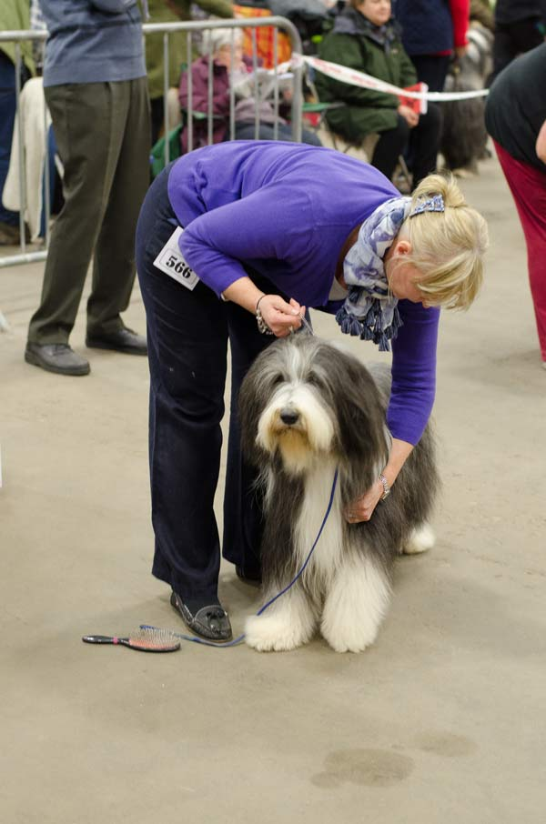 sj-ritchie-with-her-bearded-collie