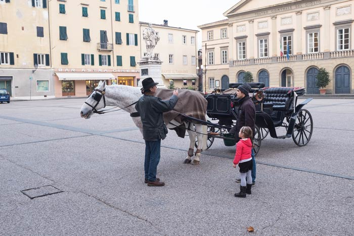Horse and carriage with young girl in Piazza del Giglio Lucca, Italy