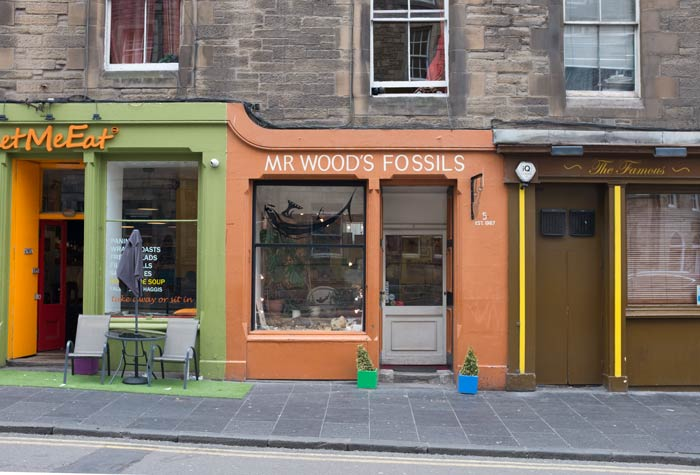 mr woods fossil shop in edinburgh filling romer's gap