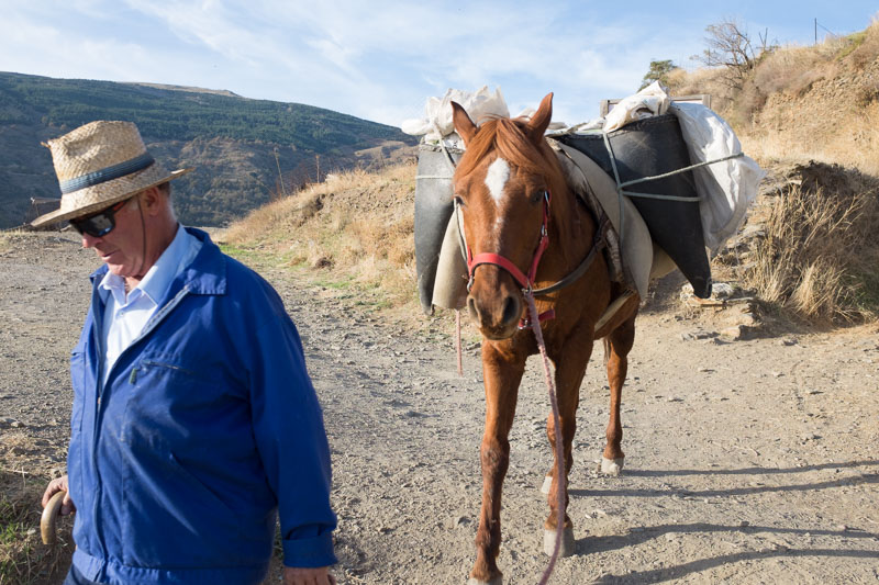 Man with packhorse above Capileira in Las Alpujarras
