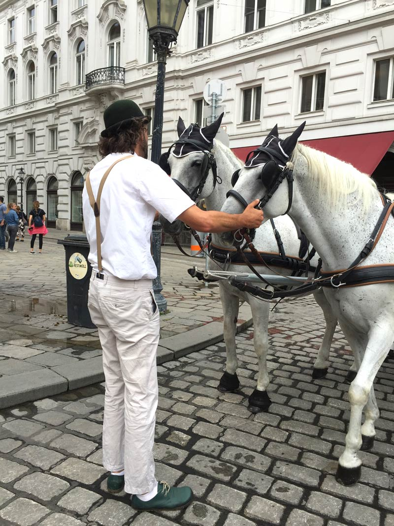 fiaker driver tending his horses in the Michaelerplatz in Vienna